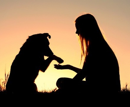 5 Best Bonding Activities for you and your doggy (Jonathan Chee Sze Chiang)